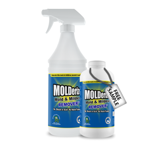 Mold Removal Treatment