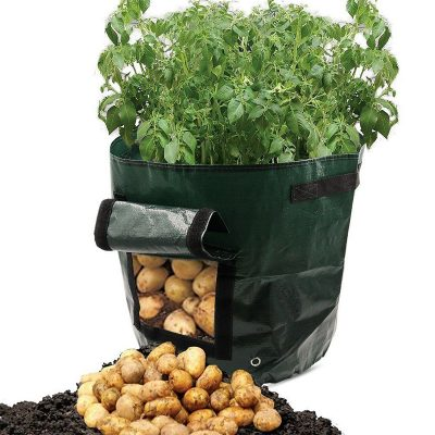 Vegetable Grow Bag
